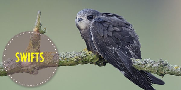 Bird 14 Ultimate Guide to Nest Boxes: Why You Should Have Them, and How to Build Your Own
