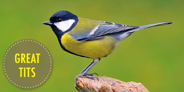 Bird 2 Ultimate Guide to Nest Boxes: Why You Should Have Them, and How to Build Your Own