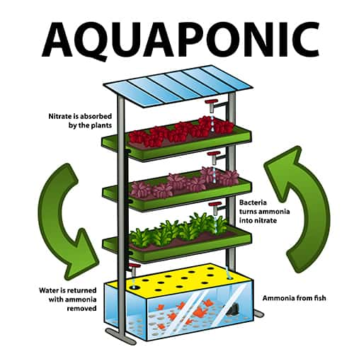 aquaponics GARDENING: A Comprehensive Guide From Planning to Harvesting, and More