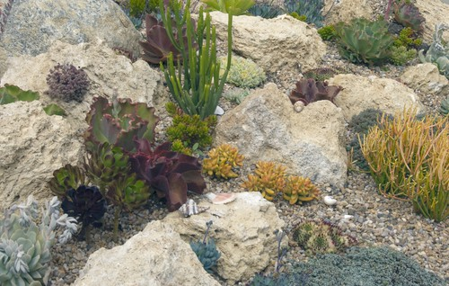 rock garden GARDENING: A Comprehensive Guide From Planning to Harvesting, and More