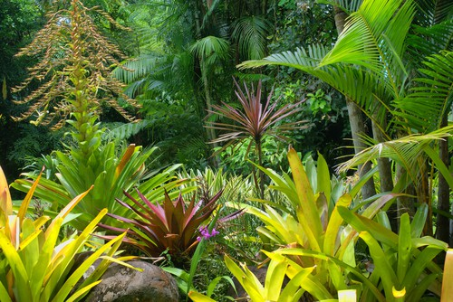 tropical garden GARDENING: A Comprehensive Guide From Planning to Harvesting, and More