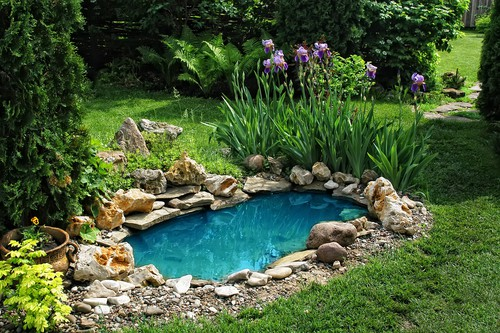 water garden GARDENING: A Comprehensive Guide From Planning to Harvesting, and More