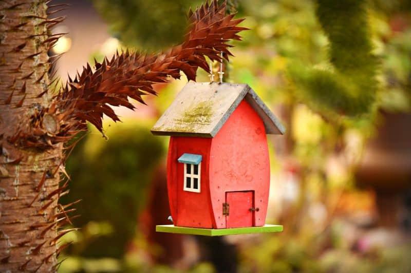 save-garden-wildlife-11-prepare-them-a-banquet