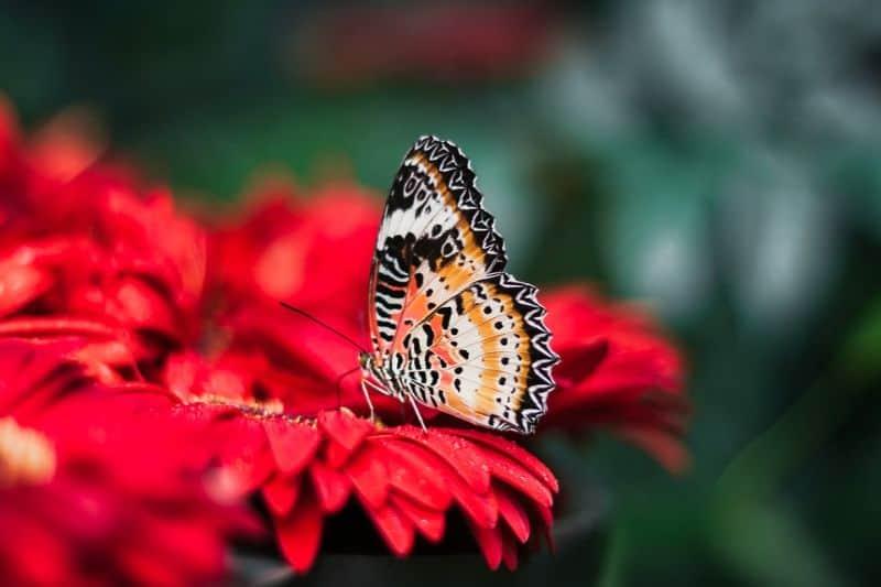 save-garden-wildlife-12-make-your-garden-a-nature-by-way