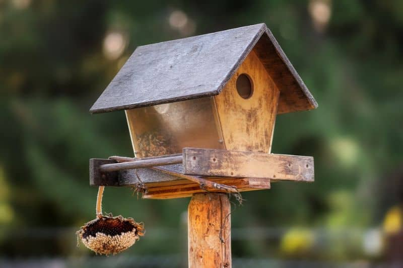 save-garden-wildlife-4-leave-a-food-and-watch-them-come