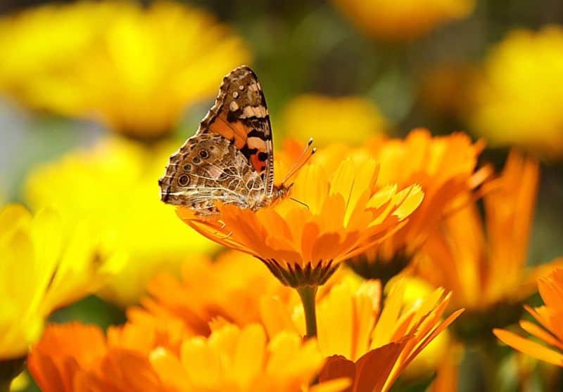 save-garden-wildlife-8-grow-flowers-especially-for-them