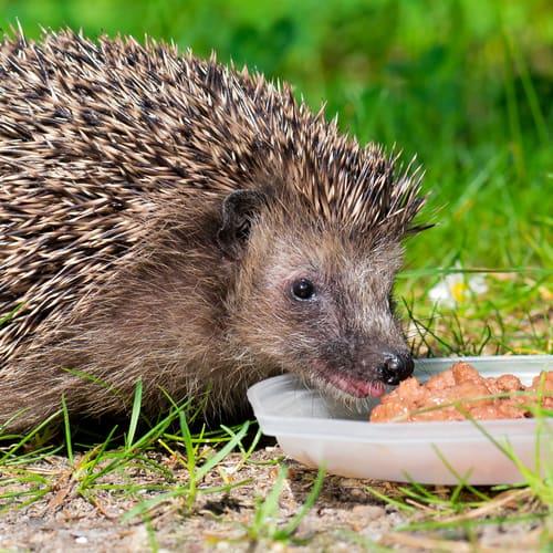 preparing-food-for-garden-mammals