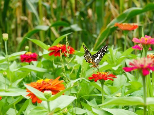 gardening-for-wildlife