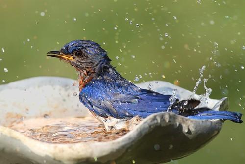 bird-bath-garden-wildlife