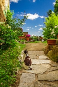 Cats on patio 199x300 How To Make Your Garden Completely Cat and Dog Friendly