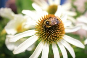 bee on plant 300x199 Signs Of Spring and What To Watch Out For In Your Garden