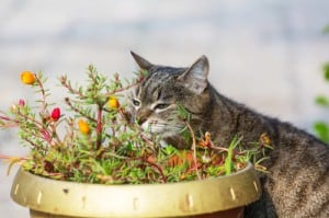 cat near pot 300x199 How To Make Your Garden Completely Cat and Dog Friendly