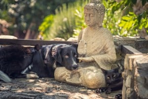 Dog and cat rest on a Buddha statue on stone steps
