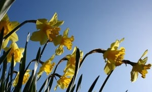 Indicators Of Spring and What To Watch Out For In Your Backyard