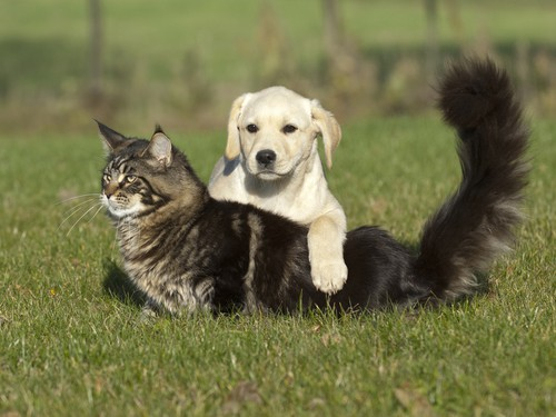 dogs and cats on grass