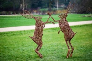 fighting hares 300x199 Signs Of Spring and What To Watch Out For In Your Garden