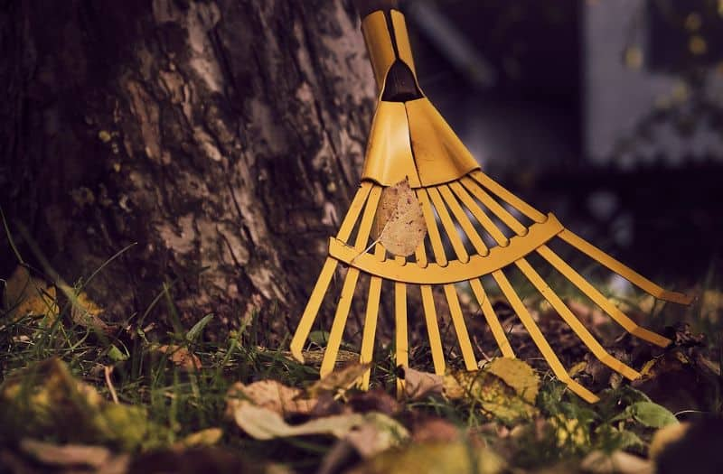 transform-garden-wildlife-haven-1-tidy-your-garden-but-not-too-much-pixabay
