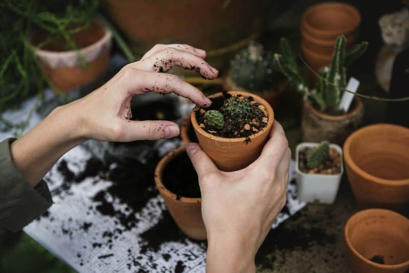 transform-garden-wildlife-haven-10-plant-some-plants-pixabay