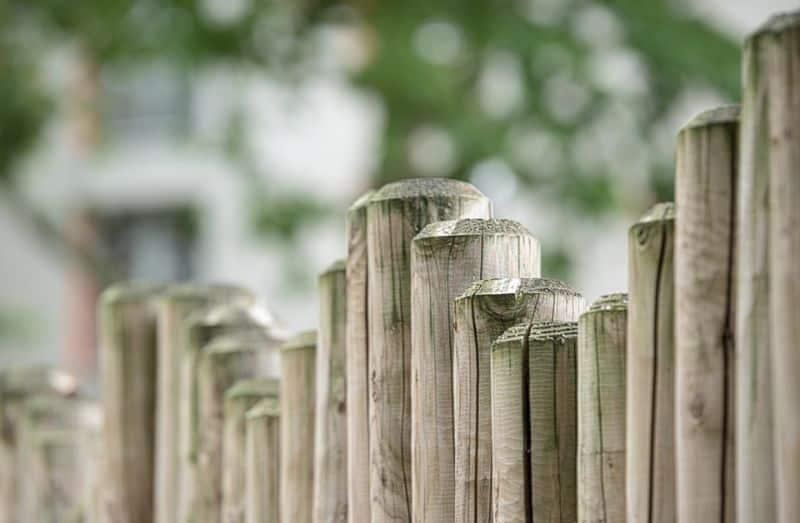 transform-garden-wildlife-haven-3-consider-your-fence-pixabay