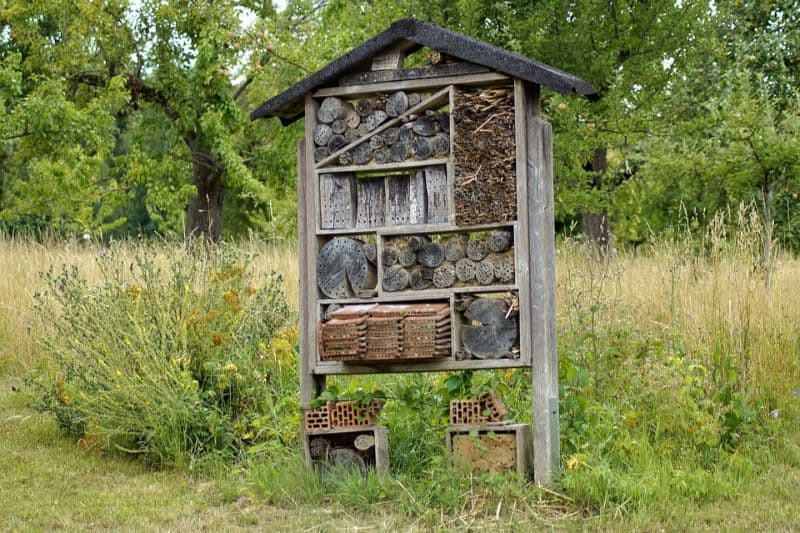 transform-garden-wildlife-haven-4-create-a-hotel-for-insects-pixabay