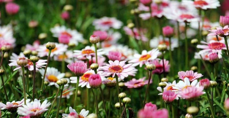 transform-garden-wildlife-haven-7-scatter-seeds-pixabay