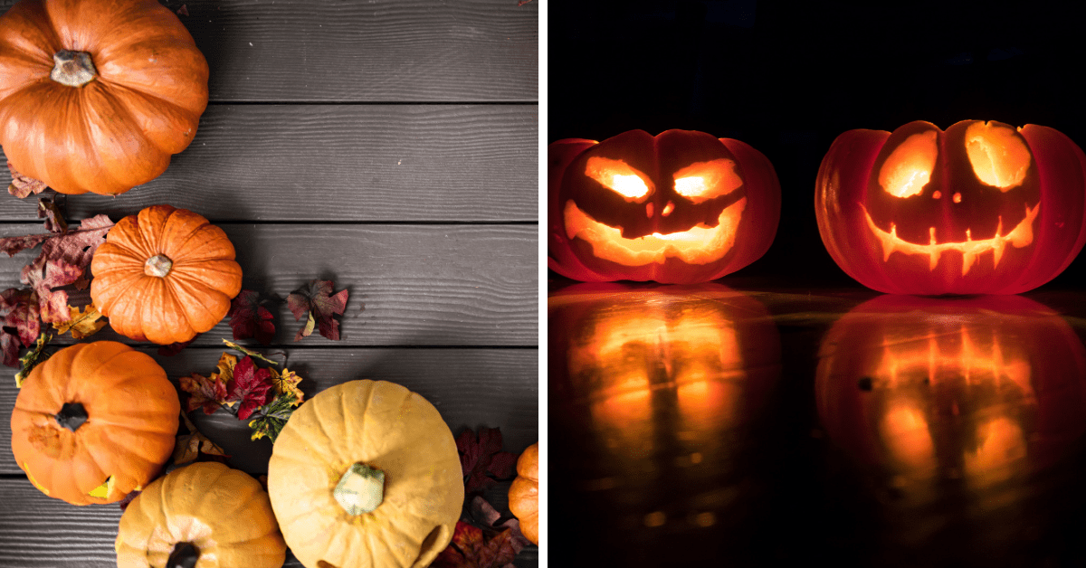 Five Tips For Picking the Best Pumpkin for Halloween