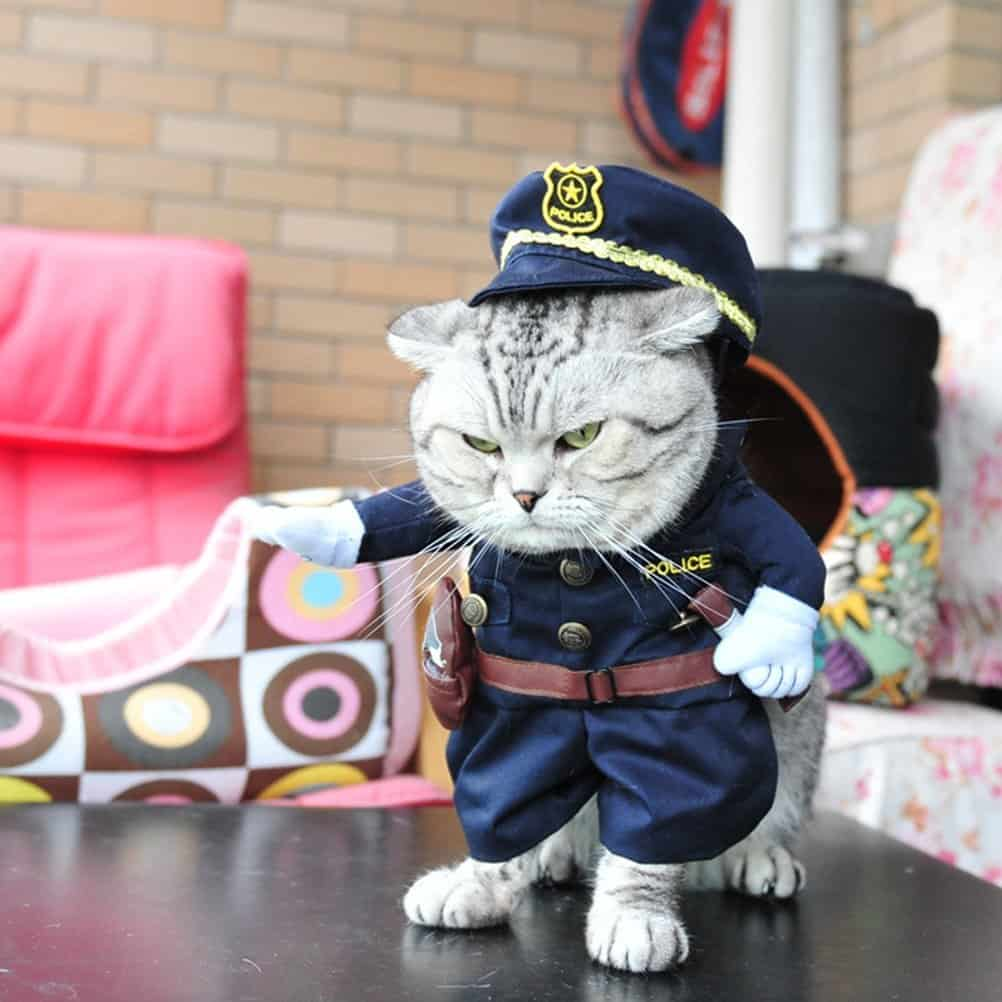Hilarious Cat Halloween Costumes