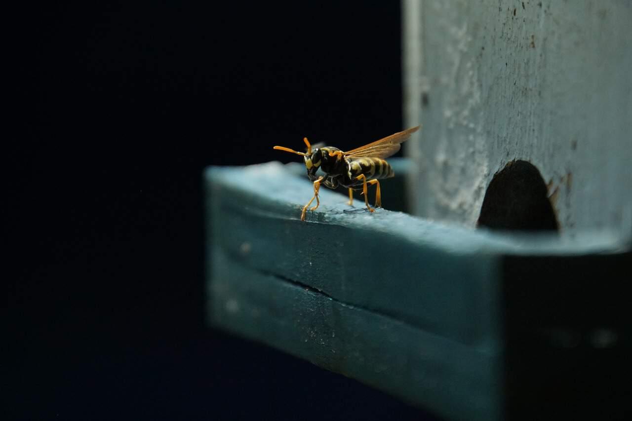 minimise-danger-garden-shed-2-making-your-shed-wasp-proof