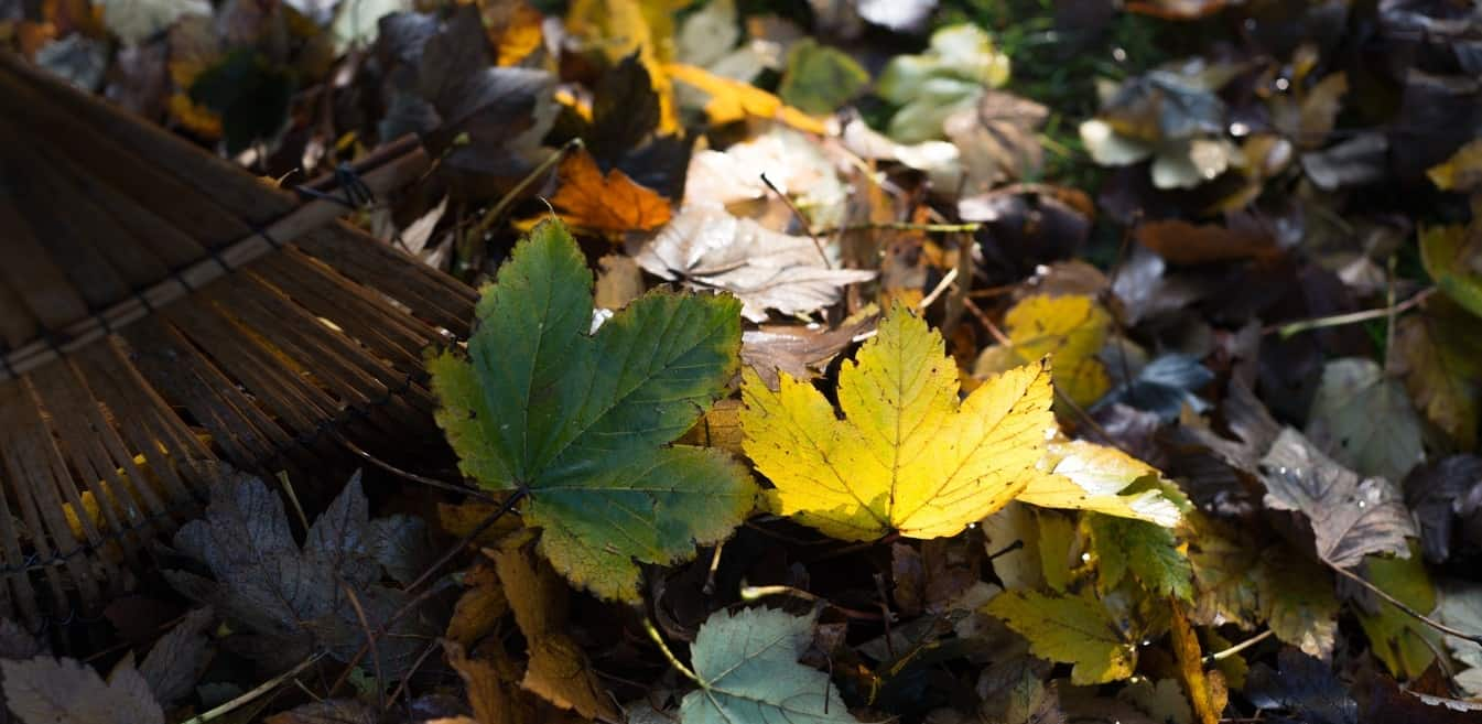 spring-clean-your-garden-1-leaf-clear-out