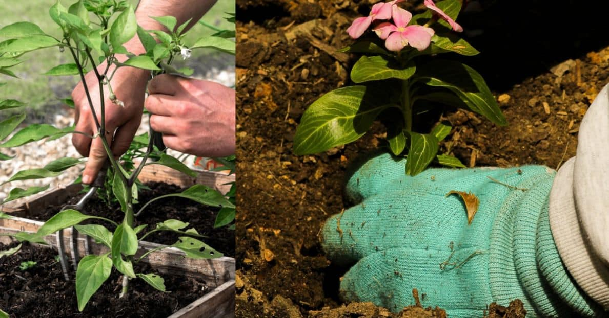 spring-clean-your-garden-7-grow-it-yourself