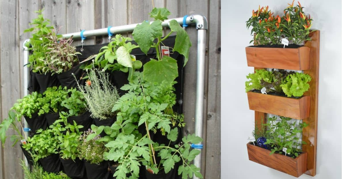 make-the-most-of-a-small-garden-3-vertical-planting