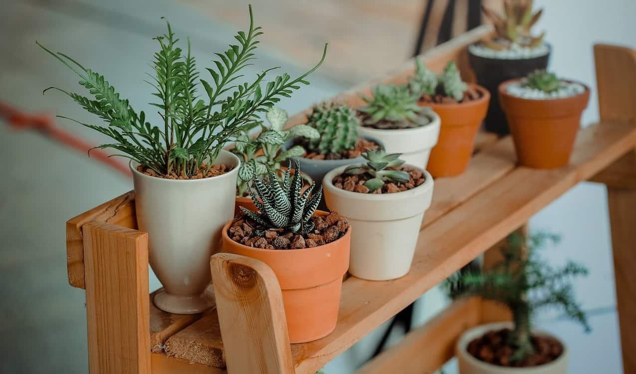 make-the-most-of-a-small-garden-5-container-garden