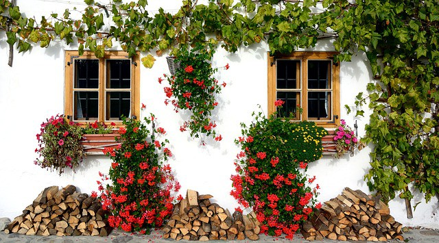 make-the-most-of-a-small-garden-7-climbers
