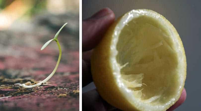 12-genius-gardening-hacks-07-citrus-rind-seedling-gardening