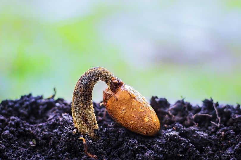 low-budget-garden-ideas-2-buy-seeds-instead