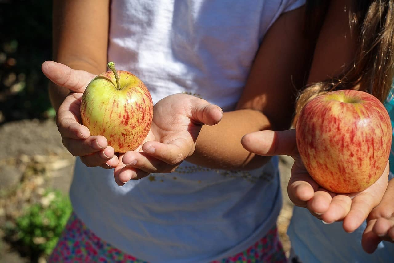 best-garden-activities-for-kids-10-picking-fruits-and-vegetables