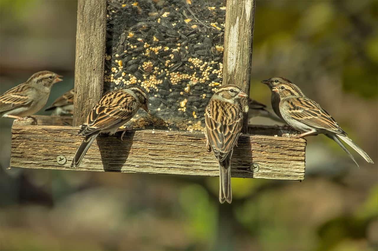 best-garden-activities-for-kids-4-feeding-birds