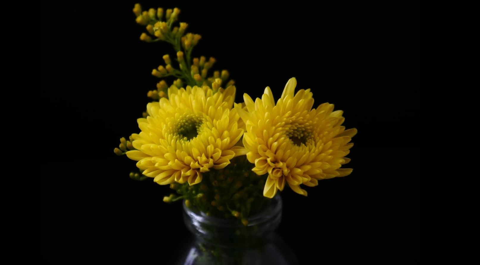 seven-stress-relief-plants-6-chrysanthemum