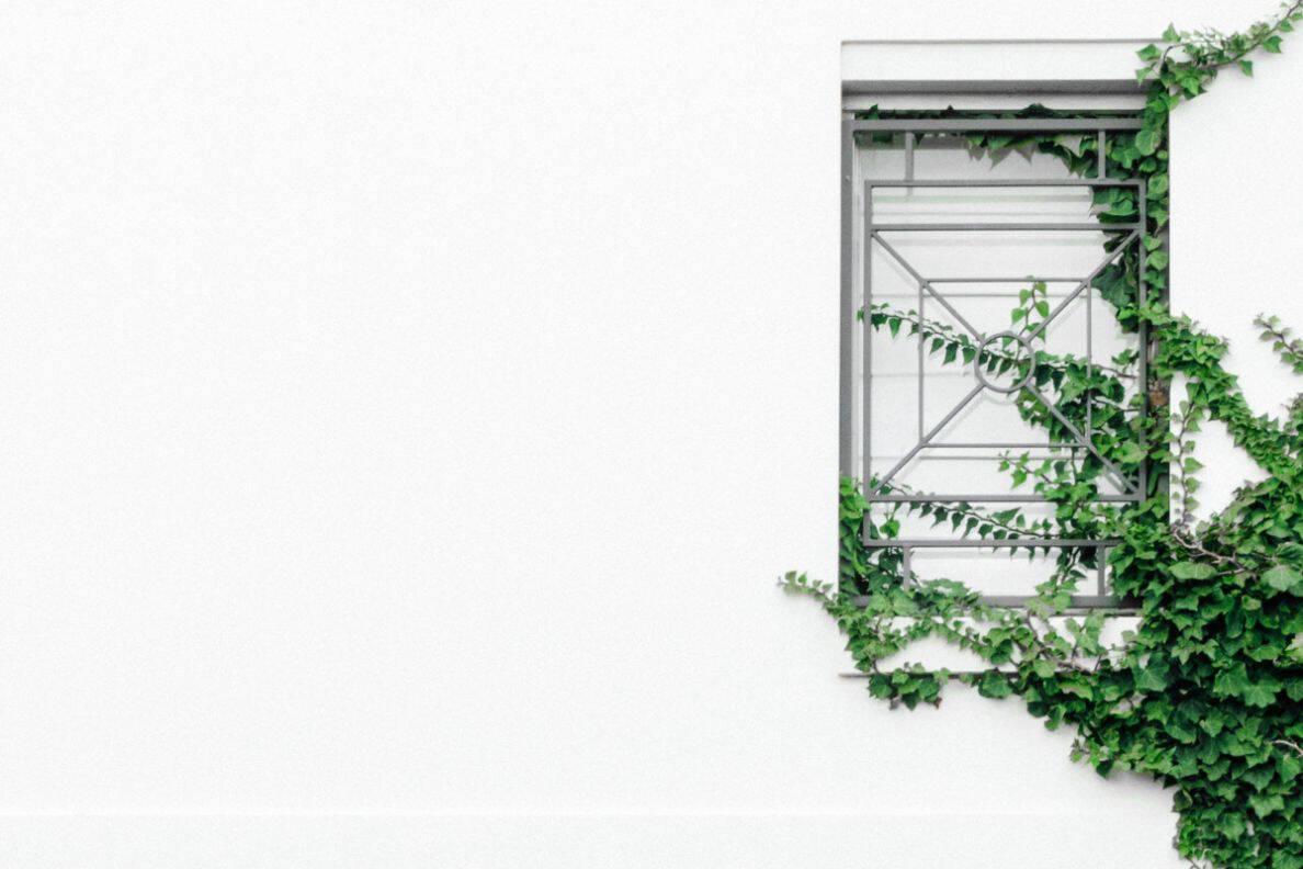 consider-choosing-garden-climbers-4-maintenance