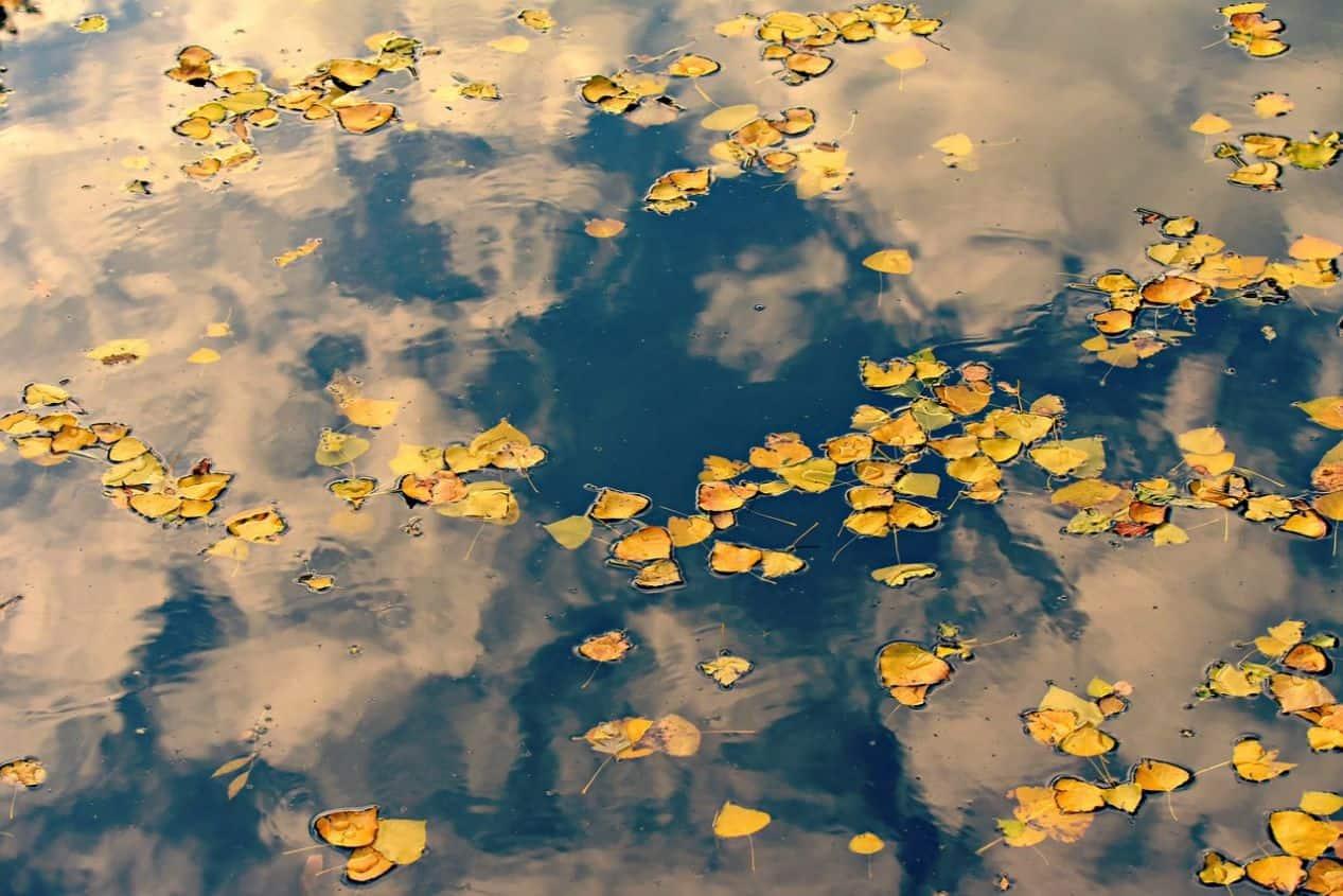 end-of-summer-gardening-1-net-pond