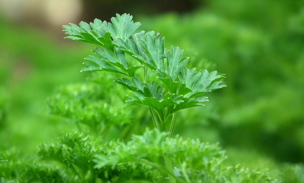 winter-greenhouse-plants-5-herbs