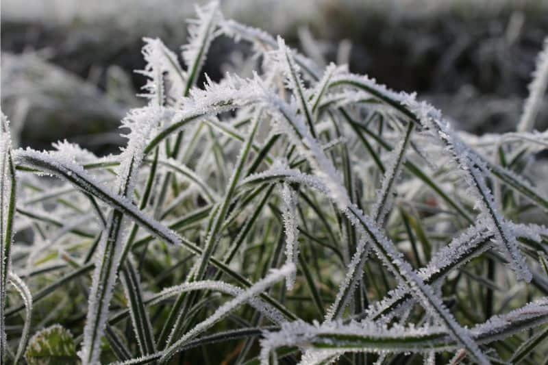 care-for-wildlife-in-winter-1-let-your-garden-go-wild