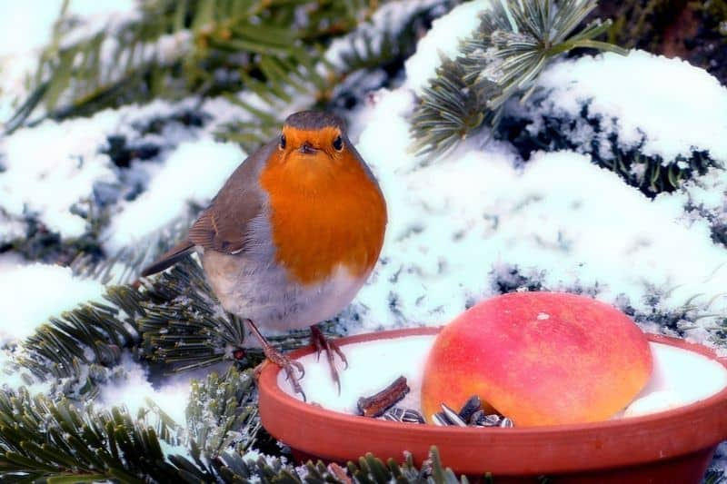 care-for-wildlife-in-winter-3-feed-the-birds