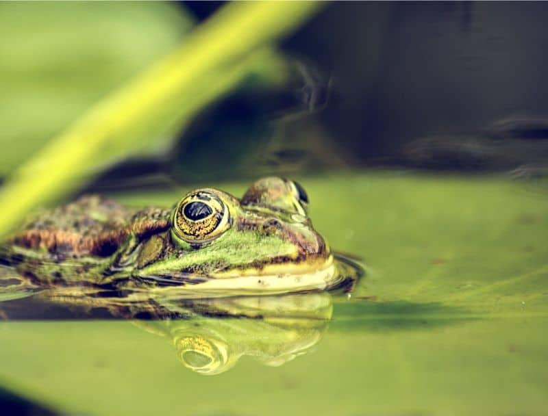 making-a-wildlife-pond-1-garden-ponds-for-wildlife