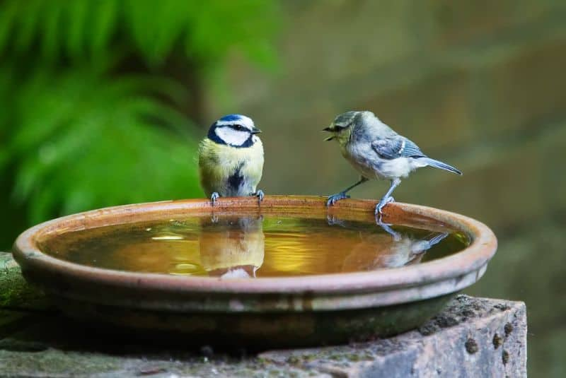 making-a-wildlife-pond-8-child-proof-water-feature