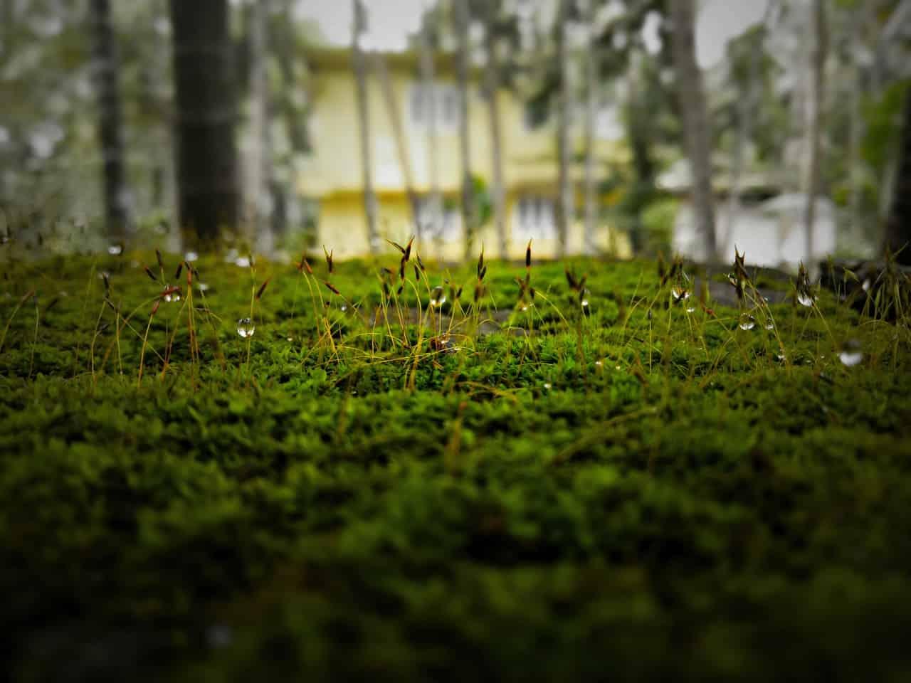 sloping-garden-ideas-4-trees