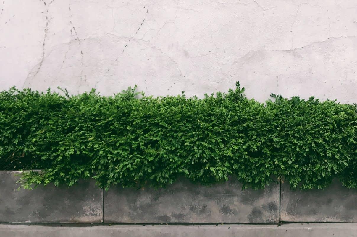 garden-trends-for-2020-4-low-maintenance