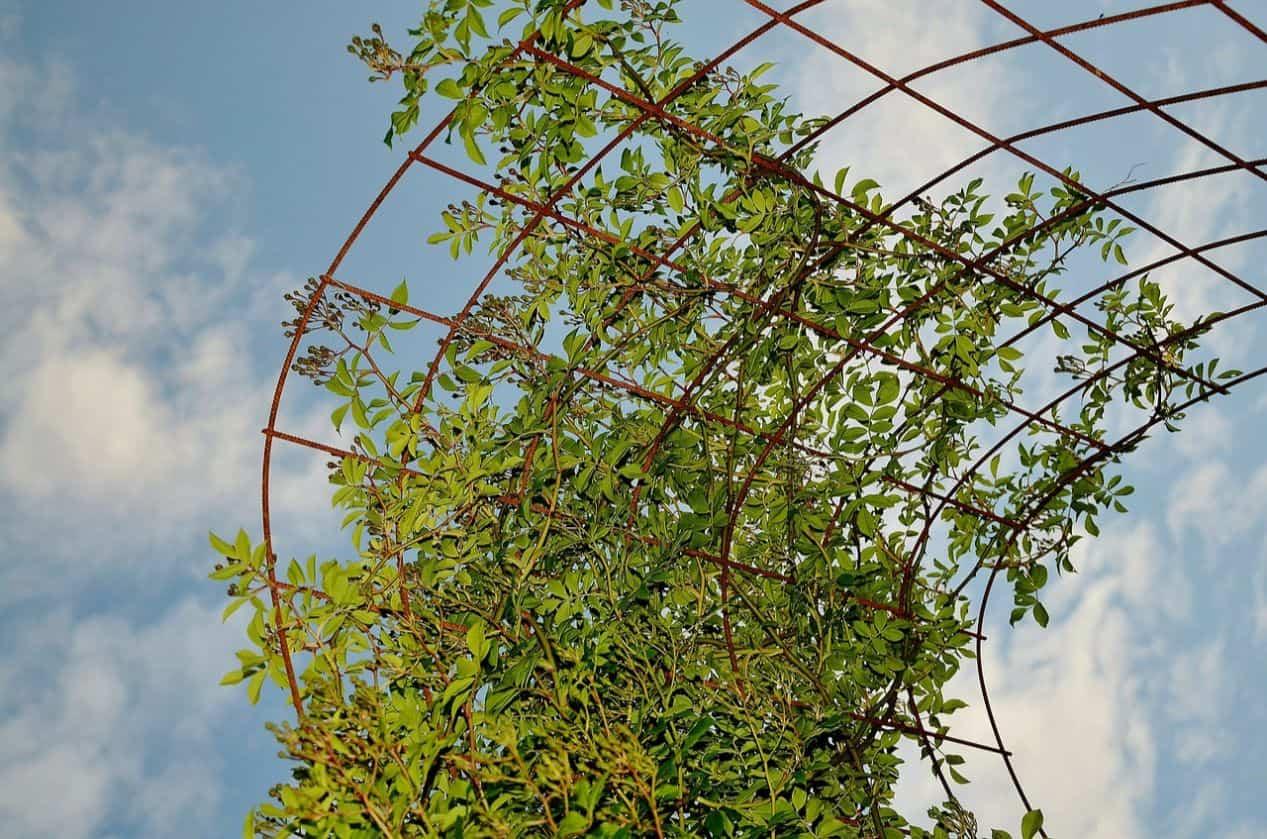 garden-trends-for-2020-6-fence-factor