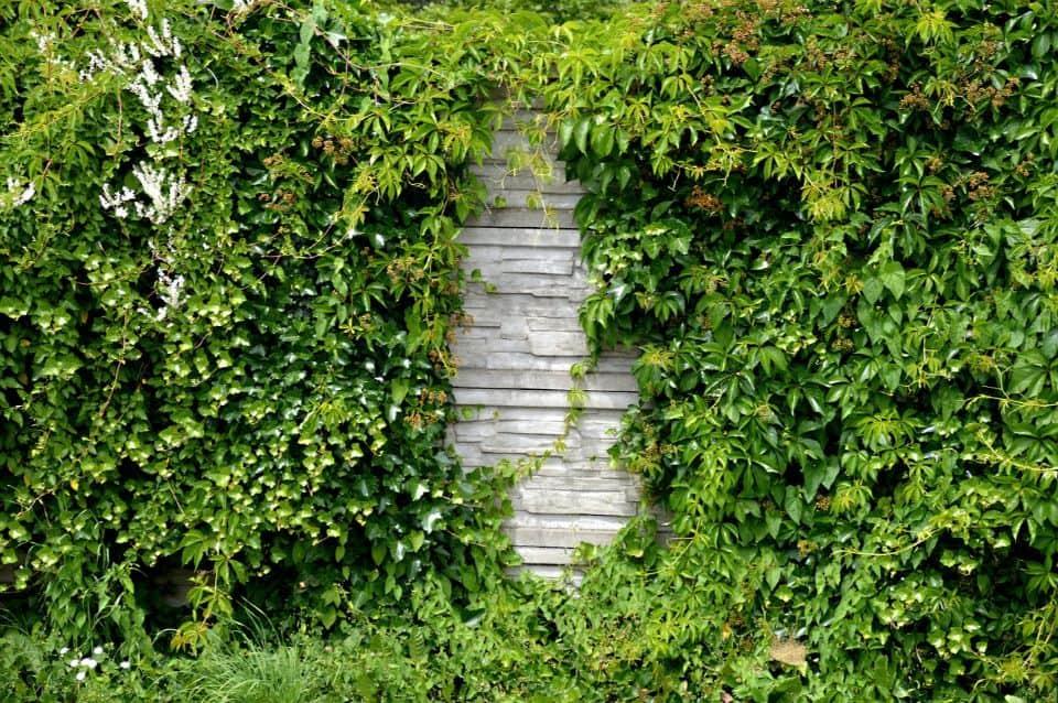 garden-trends-for-2020-7-carperted-walls