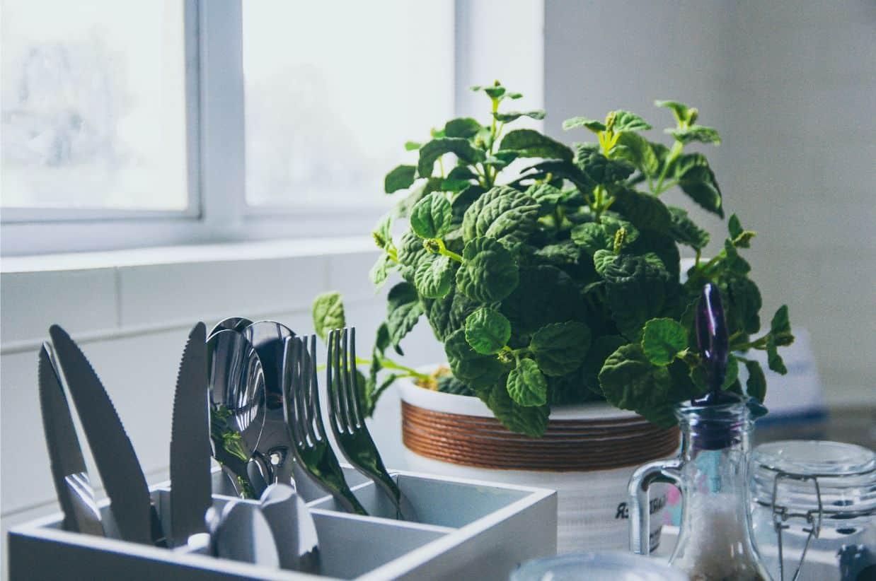 2020-pinterest-home-trends-1-indoor-micrgo-greens-unsplash